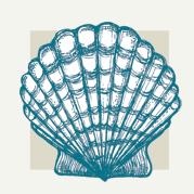 Seashell Decor
