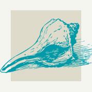 Conch Shell Decor