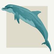 Dolphin Room Decor