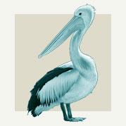 Pelican Home Decor