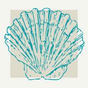 Scallop Shell Decor