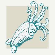 Squid Decor