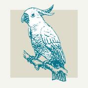 Tropical Parrot Decor