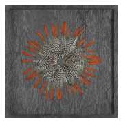Uttermost Kumara Feathered Shadow Box