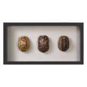 Uttermost Tortoise Shells Shadow Box