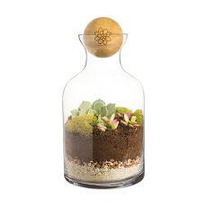 56 Oz. Glass Succulent Terrarium With Wood Ball