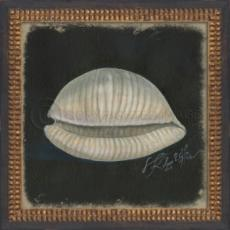 Seashell No2 Framed Art