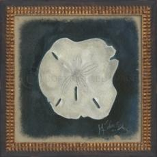 Seashell No7 Framed Art