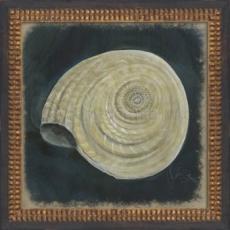 Seashell No8 Framed Art