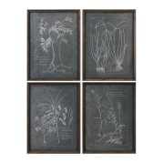 Uttermost Root Study Print Art S/4