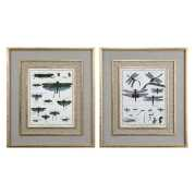 Uttermost Naturelle Insects Print Art S/2