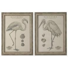 Natural History, S/2 Framed Art