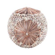 Sliced Shell Spiral Ball