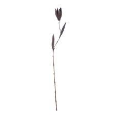 Black Palm Seed Pole