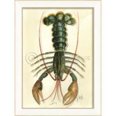 Lobster01 Framed  Art