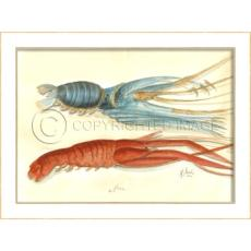 Lobster02 Framed  Art