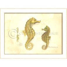 Seahorses Framed  Art