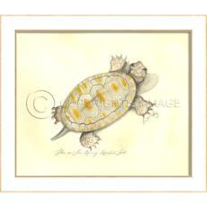 Spiney Soft Shell Turtle Framed  Art