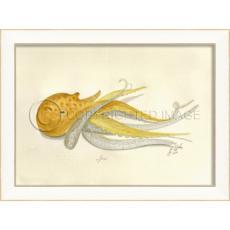 Octopus10 Framed  Art