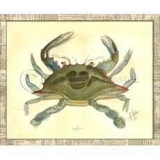 Crab04 Framed Art