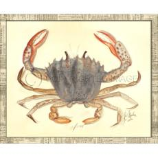 Crab08 Framed Art