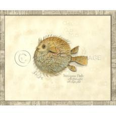 Porcupine Fish Framed Art