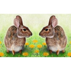 Rabbits Door Mat 30X50
