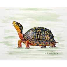Happy Turtle Door Mat 30X50