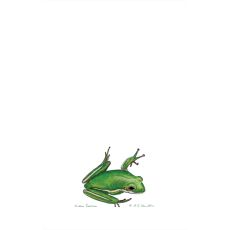 Green Tree Frog Kitchen Towel