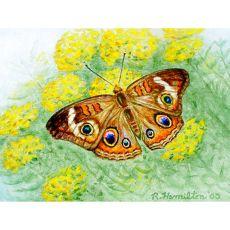 Buckeye Butterfly Place Mat Set Of 4