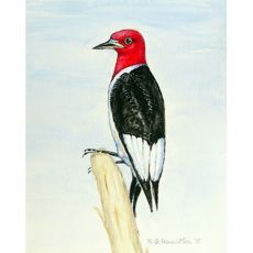 Woodpecker Outdoor Wall Hanging 24X30