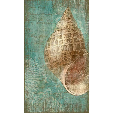 Bermuda Shell II Wall Art