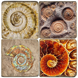 Ammonite Fossil marble coasters set of 4