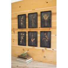 Kalalou Botanical Prints Under Glass Set of 6