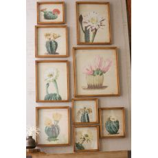 Cactus Flower Prints Under Glass Set of 9