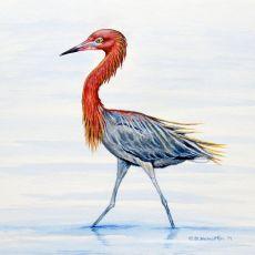 Reddish Egret Coaster Set Of 4