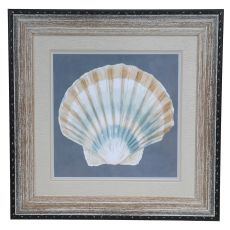 Shell On Slate 3 Framed Print