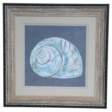 Shell On Slate 8 Framed Print