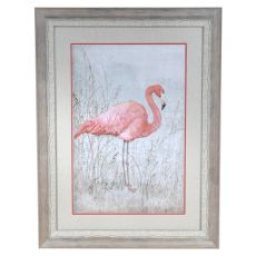 American Flamingo 1 Framed Print