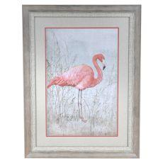 American Flamingo 1 Framed Print