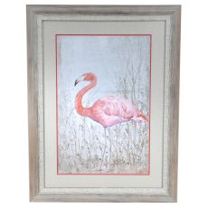 American Flamingo 2 Framed Print