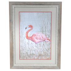 American Flamingo 2 Framed Print