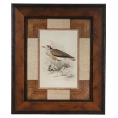 Lowland Courier Framed Print