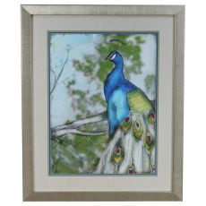 Peacock Reflections 1 Framed Print