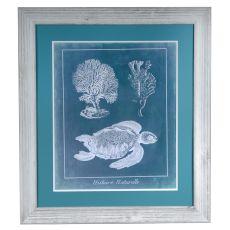 Sea Turtle 1 Framed Print