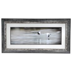 Coasting Framed Print