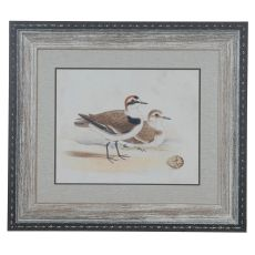 Shorebirds 5 Domestic Wall Art