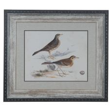 Shorebirds 6 Domestic Wall Art