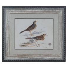 Shorebirds 6 Domestic Wall Art