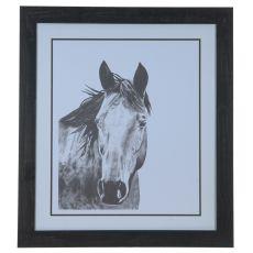 Horse Snapshot 1 Framed Print